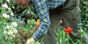 back_pain_tips_for_gardeners